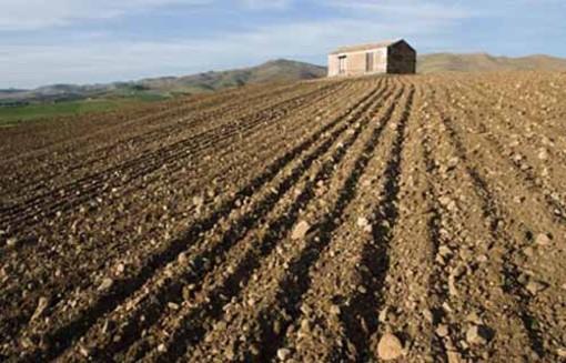 Agricoltura, aperto il bando regionale da 2 milioni di euro per migliorare le aziende agricole