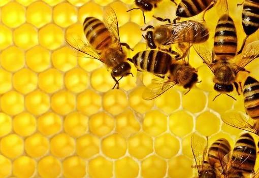 Grugliasco, fino al 20 novembre il bando per diventare allevatori di api