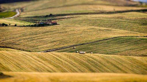 Il mondo delle piccole e medie imprese cresce anche tra i campi: domani il pmi day in agricoltura
