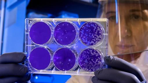 Coronavirus in Piemonte: zero decessi nella giornata di oggi, salgono a 22.451 i guariti
