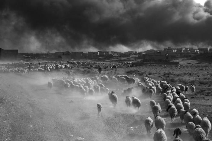 foto realizzata a Mosul
